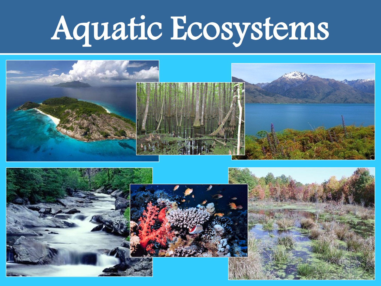 1.Ecosystem – do it now buddy