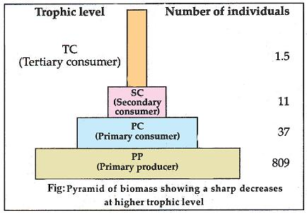 2.Ecological Pyramids,Ecological Succession and Nutrient ...